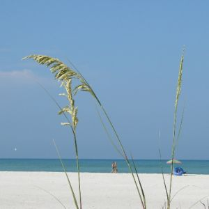 Siesta Key Beach Access Points