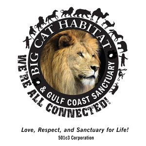Big Cat Habitat & Gulf Coast Sanctuary